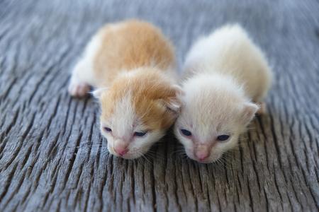 함께, 소프트 포커스 두 귀여운 고양이 재생 스톡 콘텐츠 - 78496633