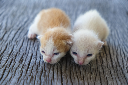Two cute cats playing together,soft focus Imagens - 78496633