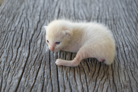 Cute little cat on wooden floor,selective and soft focus Imagens - 78496636
