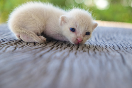 Cute little cat on wooden floor,selective and soft focus Imagens - 78496638