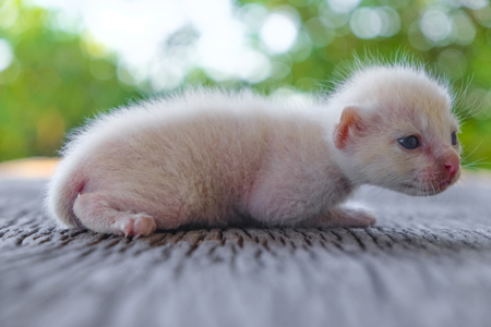 cute little cat on wooden floor,selective and soft focus Imagens - 78496652