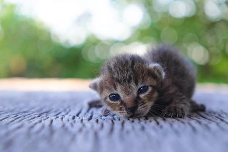 나무 바닥, 선택적 및 소프트 포커스에 귀여운 작은 고양이 스톡 콘텐츠 - 78496655