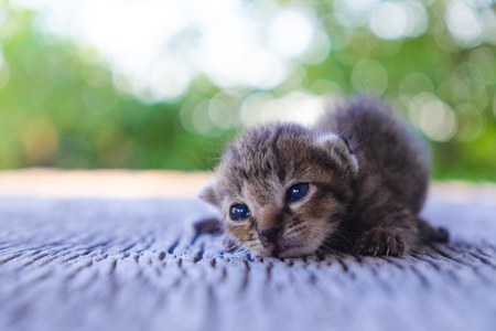 Cute little cat on wooden floor,selective and soft focus Imagens - 78496656