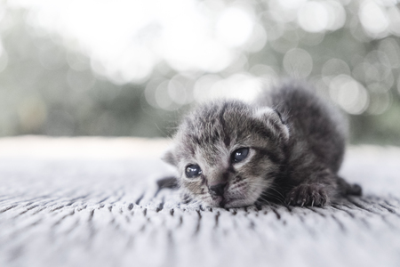 Cute little cat on wooden floor,selective and soft focus,black and white Imagens