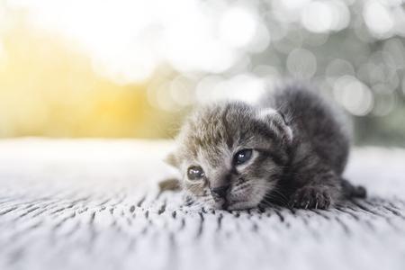 나무 바닥, 선택적 및 소프트 포커스에 귀여운 작은 고양이 스톡 콘텐츠 - 78496683
