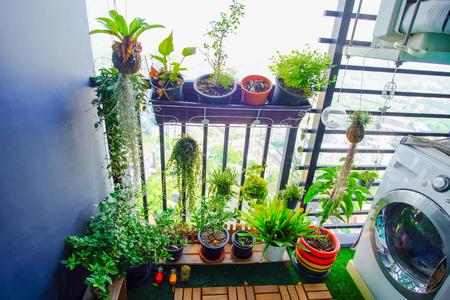 Plantas naturales en las macetas colgantes en el balcón del jardín Foto de archivo - 87736091