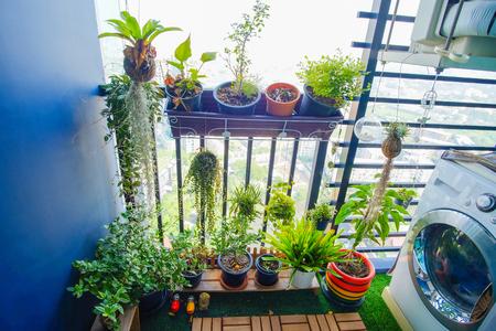 발코니 정원에 매달려있는 냄비에있는 천연 식물