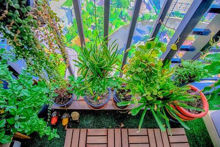 발코니 정원에 매달려있는 냄비에있는 천연 식물 스톡 콘텐츠 - 87726436