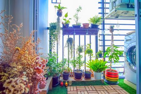 발코니 정원에 매달려있는 냄비에있는 천연 식물 스톡 콘텐츠 - 87759301