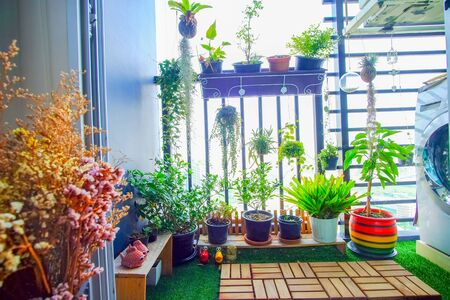 natural plants in the hanging pots at balcony garden