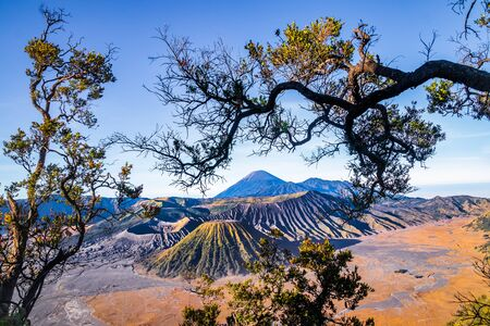 Mount Bromo volcano is on the back of a branch Imagens