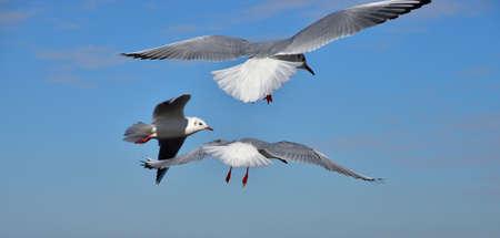 青い空に向かって飛んでいる海の鳥の光景
