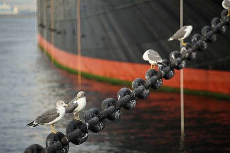 港で船の係留のために鎖につながれた海鳥