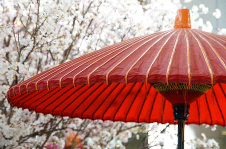 Spring cherry blossom and red umbrella in a Japanese park on a sunny day 写真素材