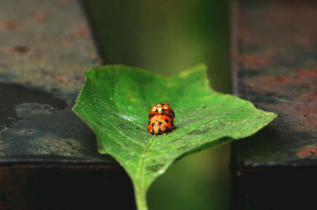 Ladybug in bussiness