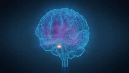 3D-Darstellung des menschlichen Gehirns mit Windungen und einer Ausstrahlung von Licht