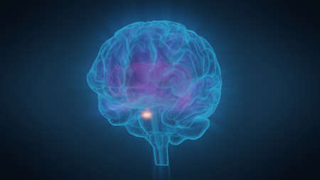 3d illustration human brain with convolutions and a radiance of light