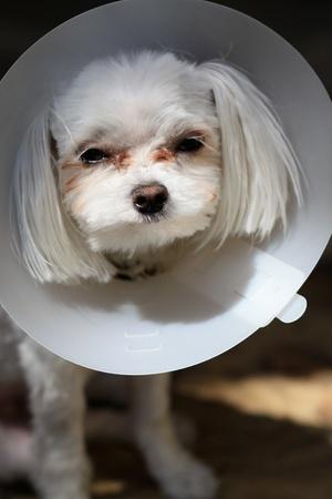 A sick dog Stock Photo