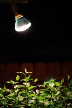 Licht schijnt op de planten Stockfoto