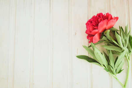 flatly: top view red peony on white wooden background with copyspace Stock Photo