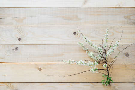 flatly: top view blooming branch spirea on wooden background