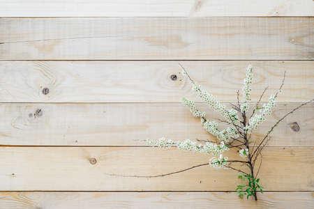 Draufsicht blühenden Zweig spirea auf Holzuntergrund