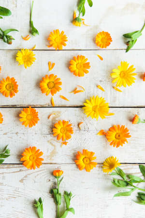 flatly: pattern of calendula flowers on the table