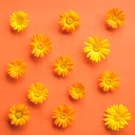 pattern of marigold flower on a paper background Stock Photo