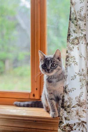 mongrel: mongrel cat sitting on a window sill