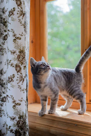 sill: mongrel cat stand on a window sill Stock Photo