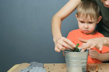 Europäische Mutter und kleines blondes Kind Sohn pflanzen Geldbaumpflanze in Metallblumentopf auf Tisch, Haus drinnen Gartenarbeit, horizontales Fotobild mit Kopienraum für Text Standard-Bild