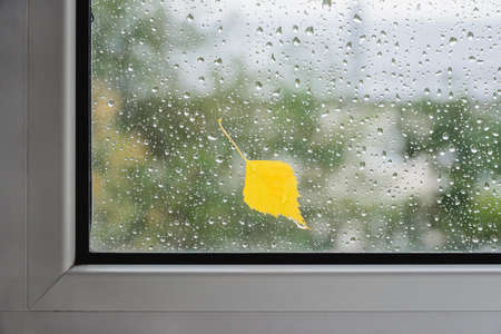 yellow birch leaf on wet glass of window with autumn blurred reflection trees, horizontal   image