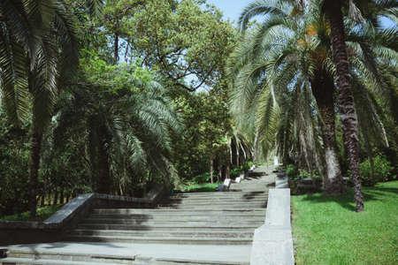 malerische Landschaft mit Bäumen und Steintreppen im National City Arboretum Park Sotschi, Sehenswürdigkeiten, Urlaub, Wochenende oder Erfolgskonzept, horizontal im Freien
