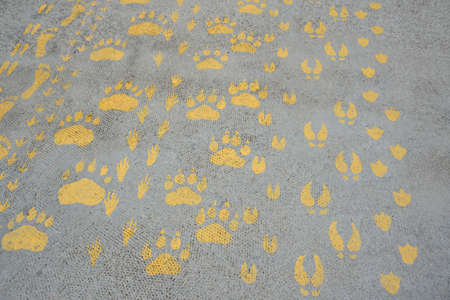 silhouette prints of traces of animal, human, birds on asphalt pavement path painted with yellow paint, stock photo image background
