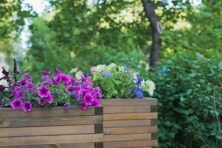 petunia, amaranth, ageratum and lobelia flowers in wooden container flower pot outside in street cafe, outdoors planting landscaping, horizontal stock photo image background