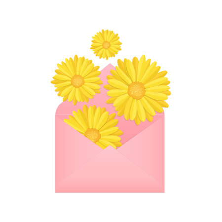 flying, falling or flat lay yellow blooming calendula flower buds and pink paper envelope, stock vector illustration design element isolated on white background Illustration