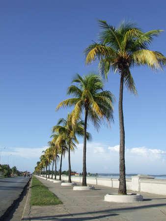 Palm trees in Cienfuegos dike, Cuba photo