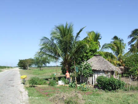 Small ranch of a nursery, in cuban country photo