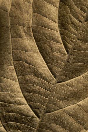 Leaf of plant close up  Banque d'images