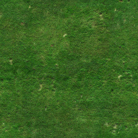 Green grass texture photo