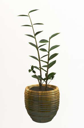 Small decorative tree  Stock Photo - 10016864