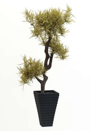 Small decorative tree Stock Photo - 10016862