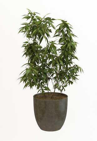 Small decorative tree Stock Photo - 10117963