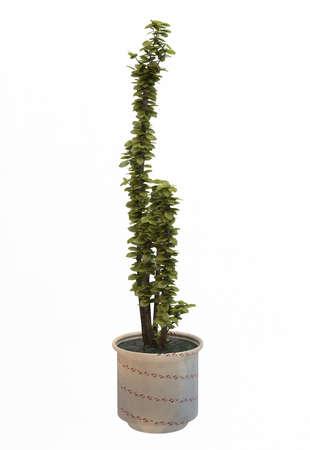 Small decorative tree Stock Photo - 10117957