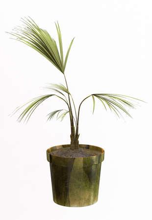 Small decorative tree Stock Photo - 10117959