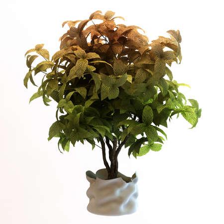 Small decorative tree Stock Photo - 10117961