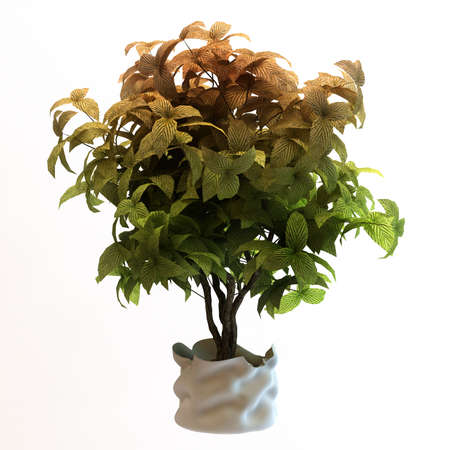 ornamental shrub: Small decorative tree