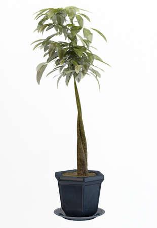 Small decorative tree