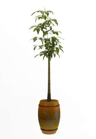 Small decorative tree  Stock Photo