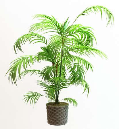 Small decorative tree  Banque d'images